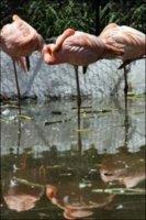 375237389-gay-flamingos-pick-chick.jpg
