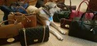 dog & bags.jpg
