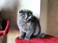 Need a pair of female cat names! - PurseForum