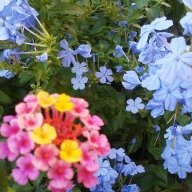 19flowers