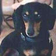 bag hound